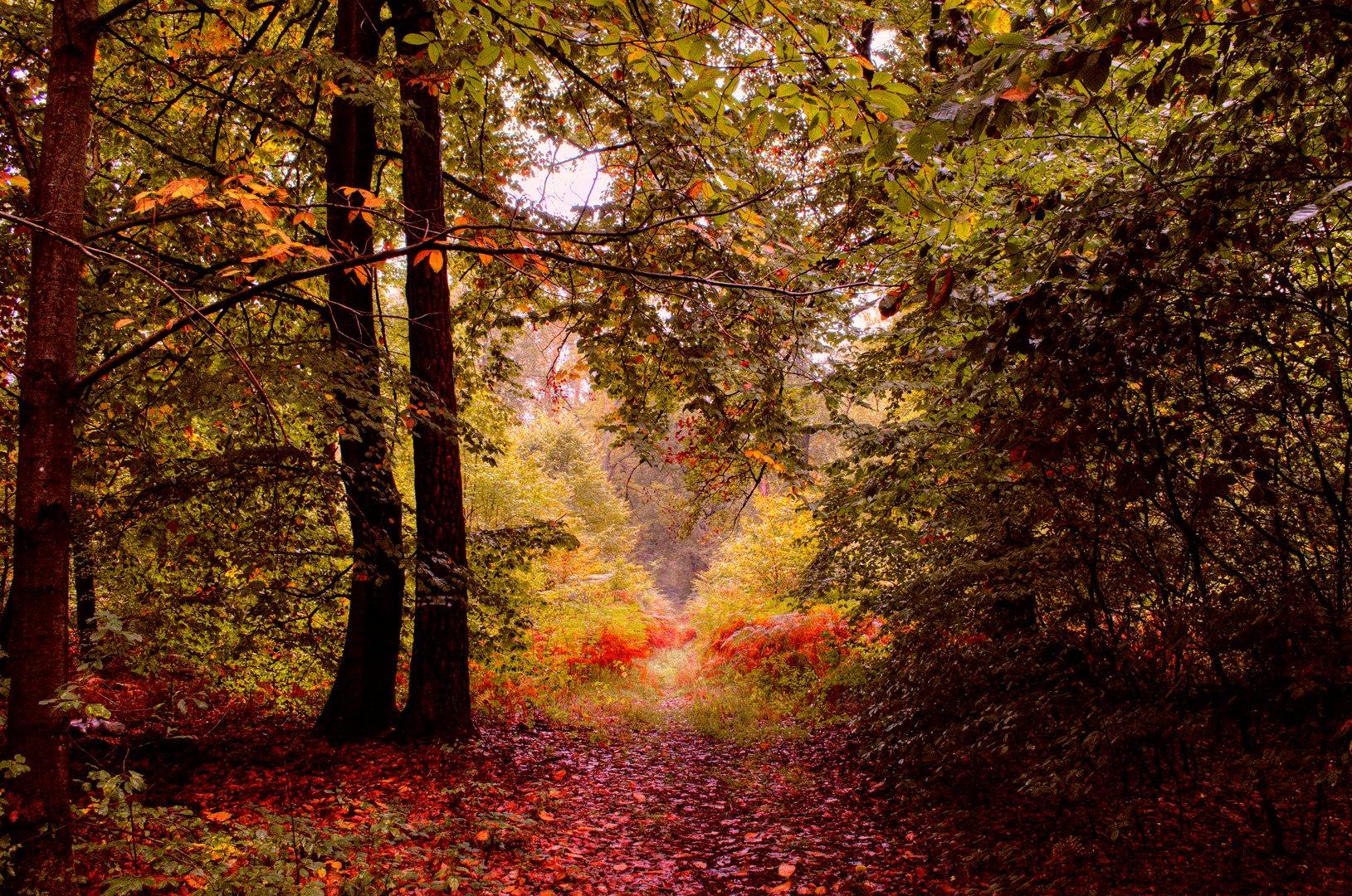 Goldbrauner Herbstwald