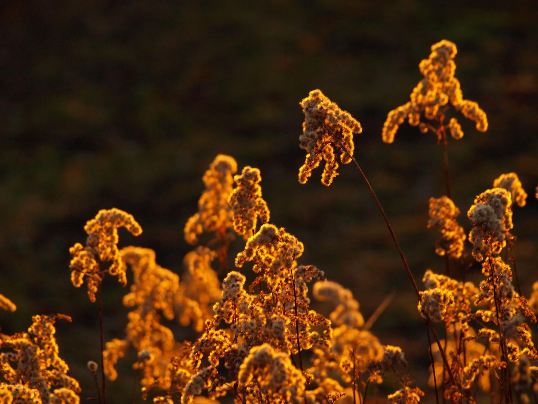 Golden atmosphere...