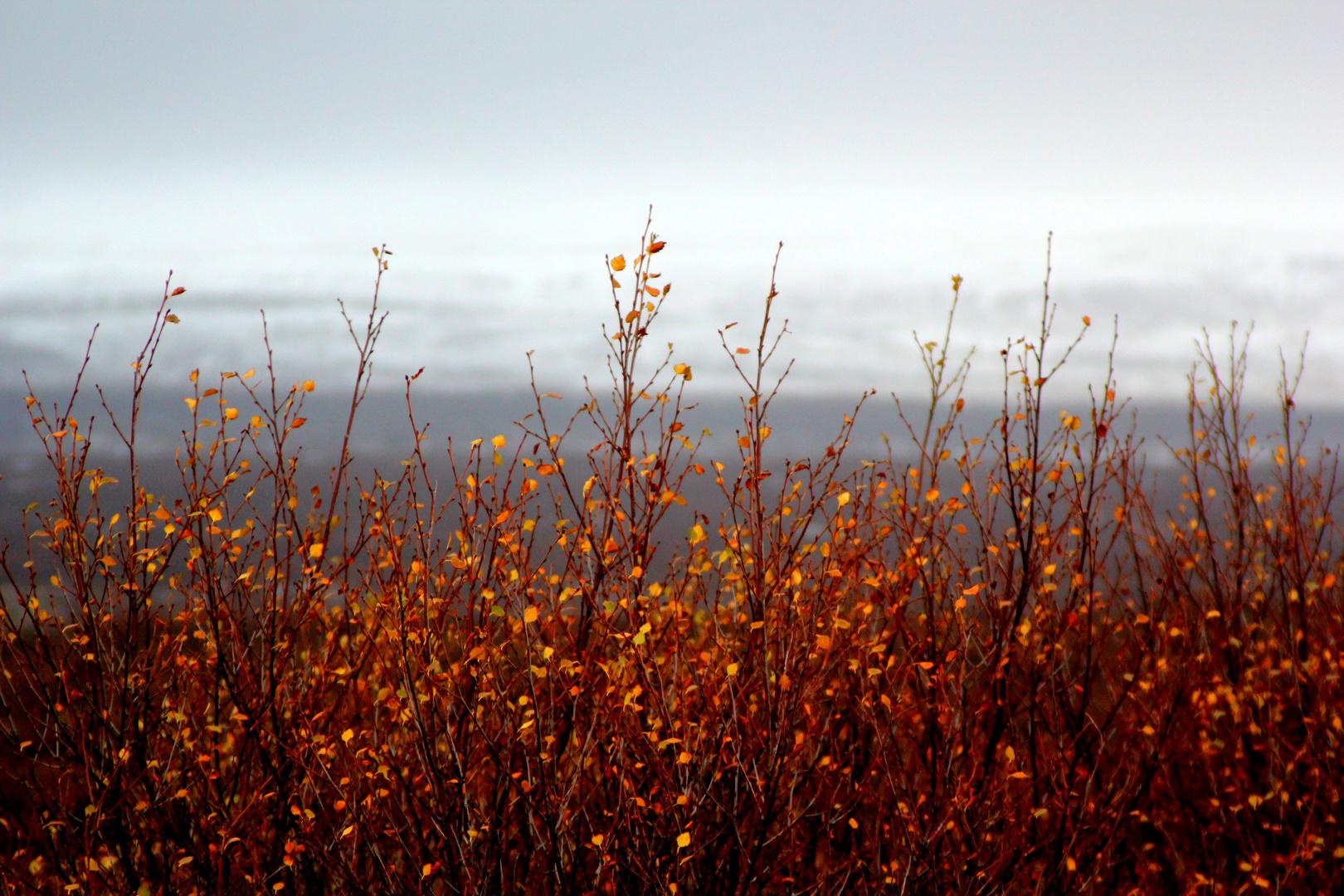 golden autumn in iceland