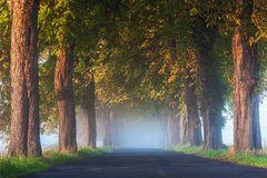 Golden Days - Kastanien im Morgennebel