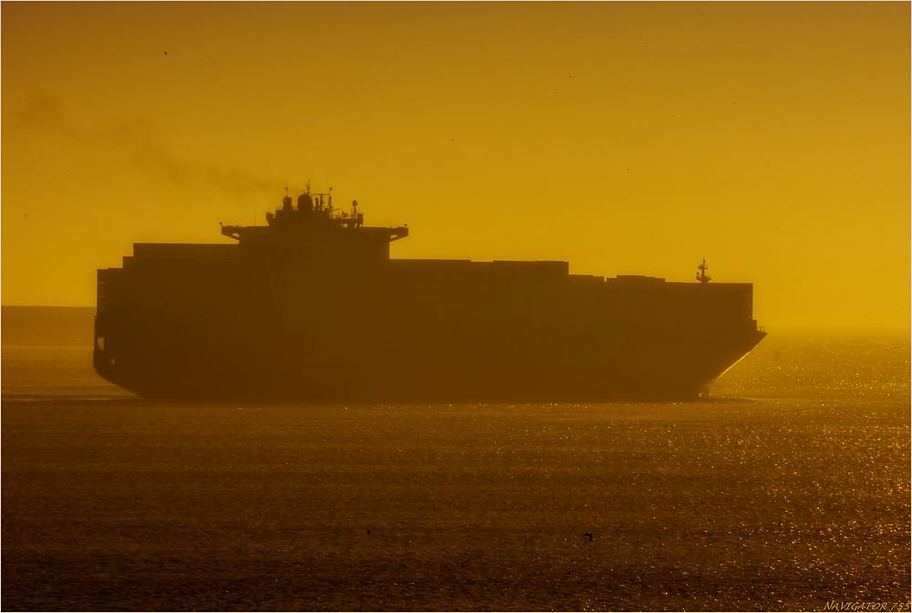 Golden Dust. / Rotterdam