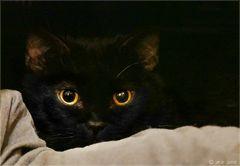 Golden Eyes....