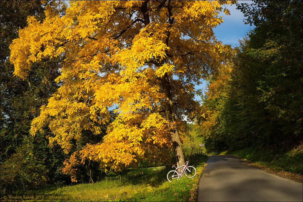 Golden foliage and a road bike