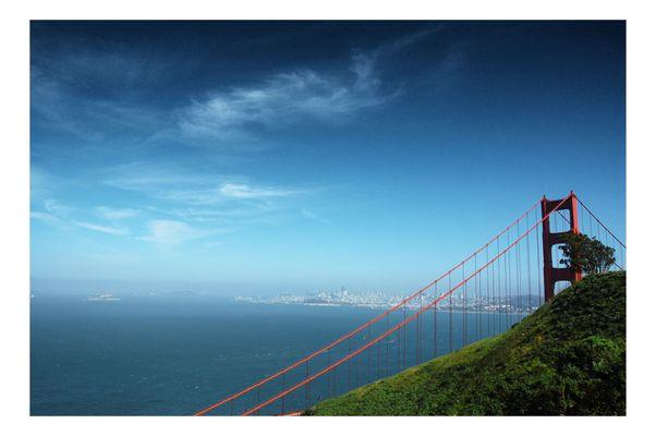 Golden Gate und ein Baum