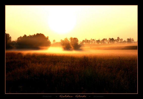Golden Glade