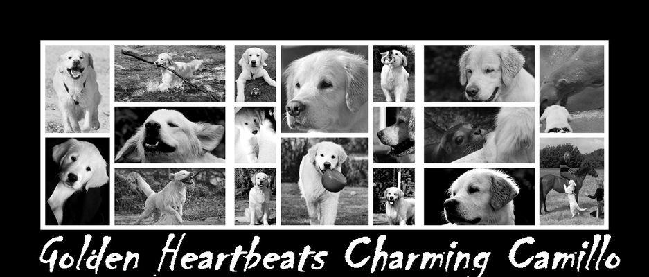 Golden Heartbeats Charming Camillo