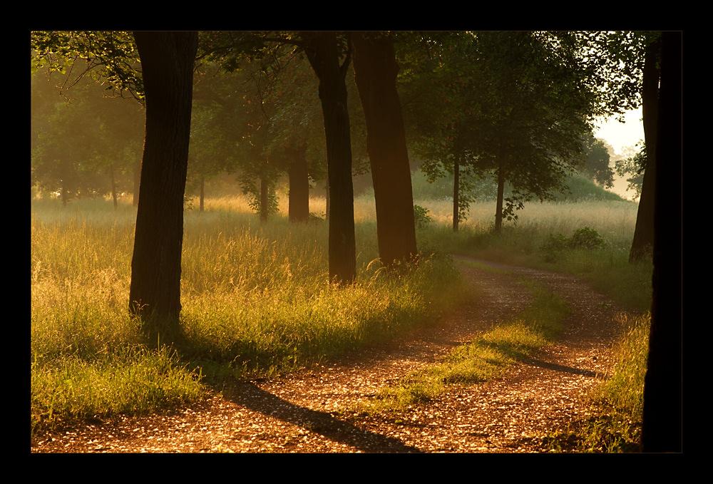 golden morning # 2