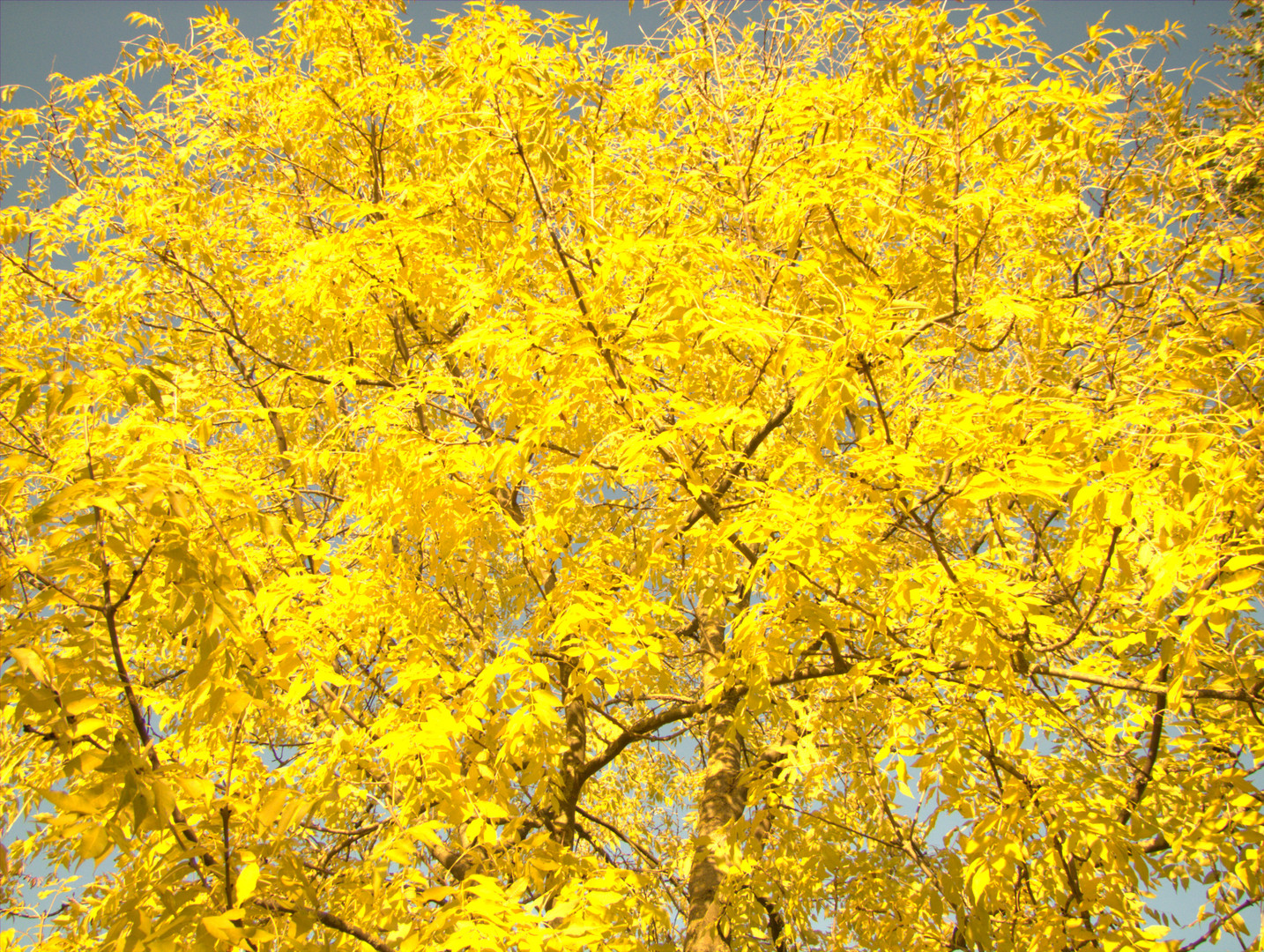 Golden October in the municipality county Hoya.