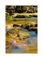 ...golden water...