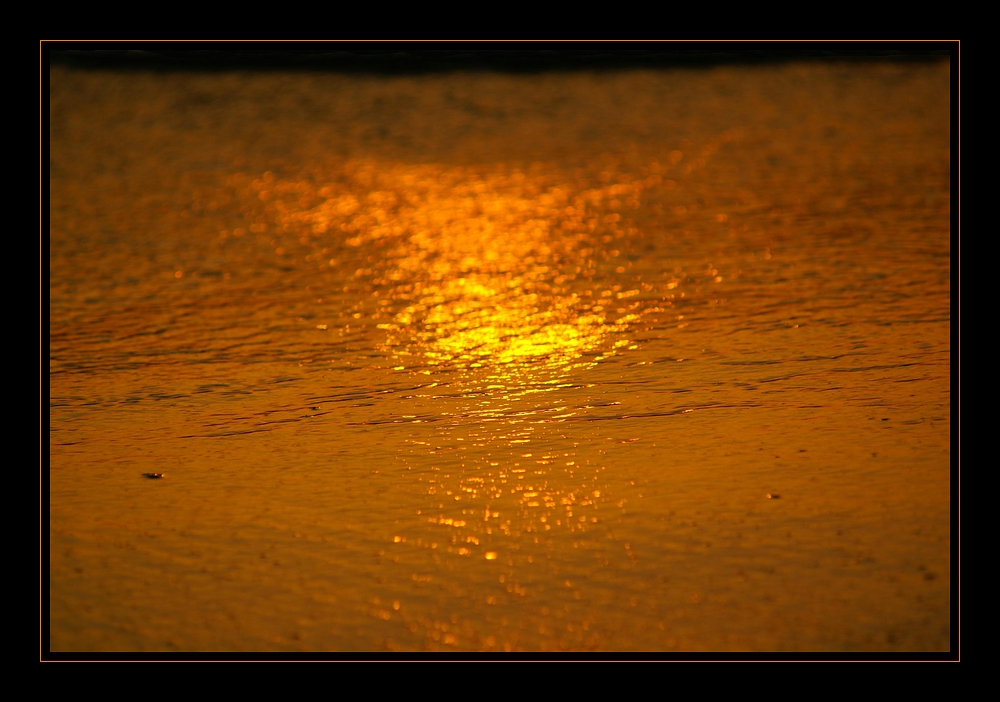 golden wave [4]