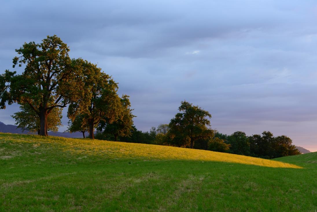 Goldene Abendsonne