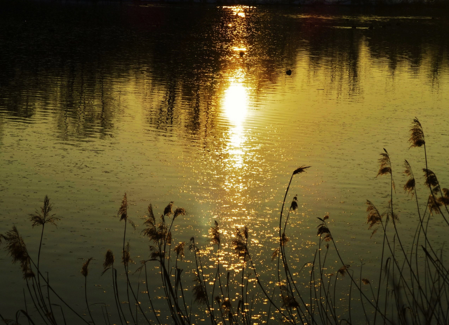 * goldene Abendsonne *