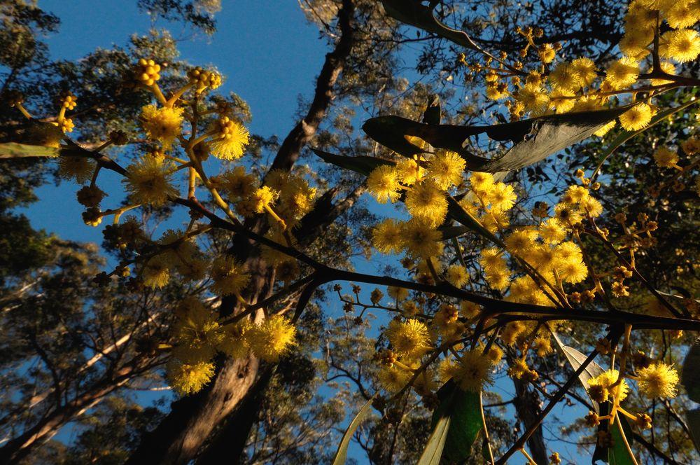 Goldene Natur von Micha R