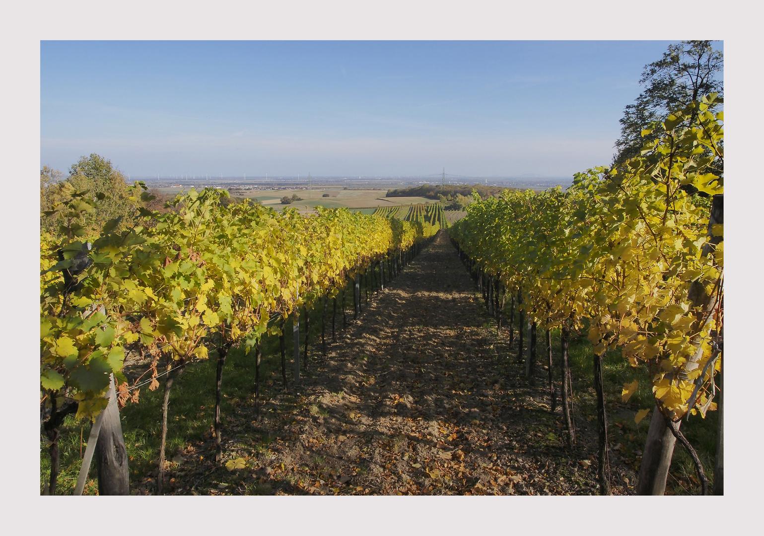 Goldene Reben und guter Wein
