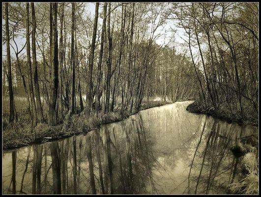 Goldene Sumpf