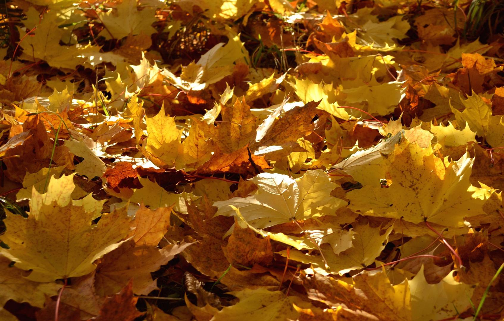 Goldener Blättersalat