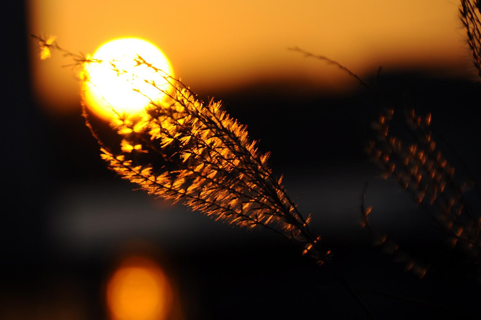 Goldener Glanz am Tegeler See