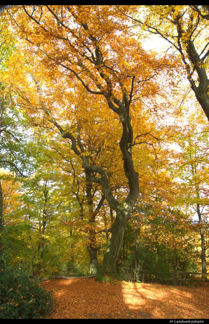 Goldener Herbst 1