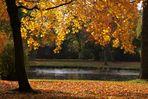Goldener Herbst #2