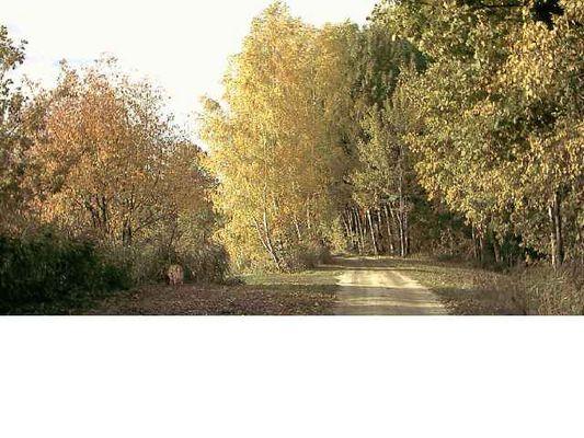 Goldener Herbst 2003