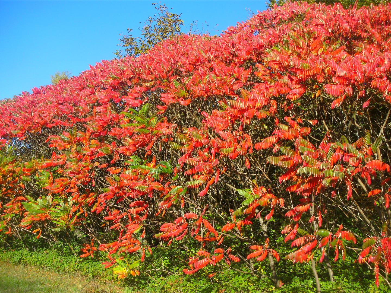 Goldener Herbst 3