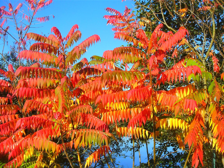 Goldener Herbst 4