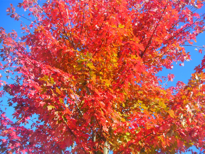 Goldener Herbst 5