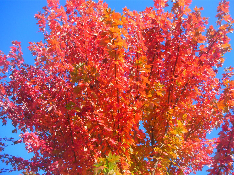 Goldener Herbst 6