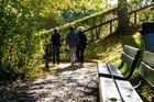 Goldener Herbst auf Dreiweihern über St. Gallen #3