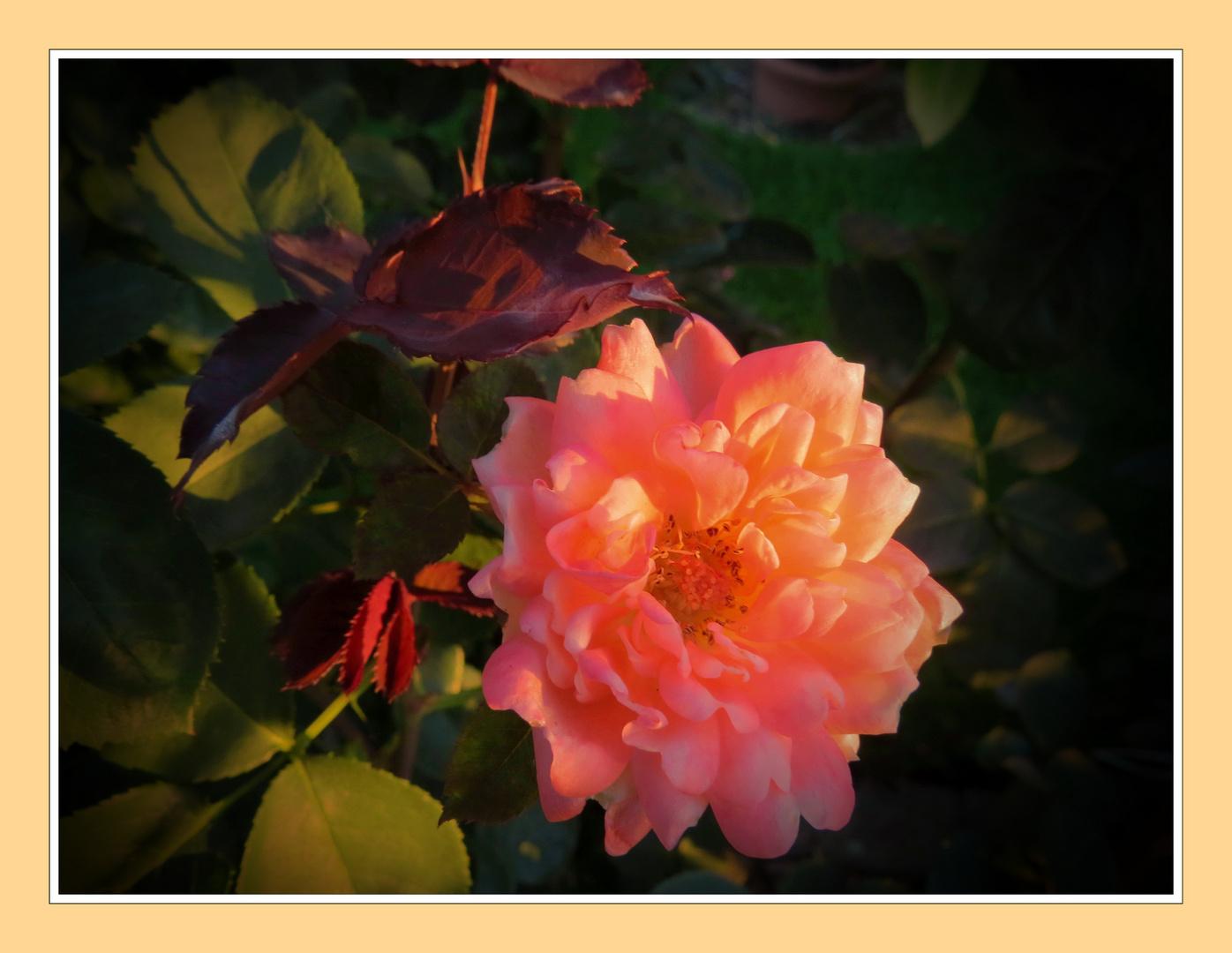 goldener Herbst - das erste Sonnenlicht heut' früh