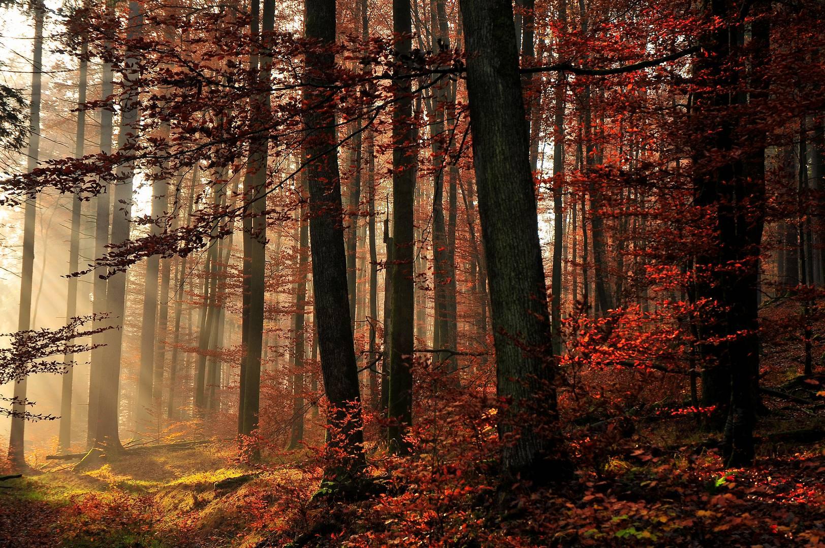 Goldener Herbst,,,