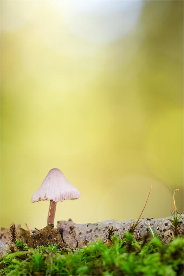 ~ goldener herbst II ~
