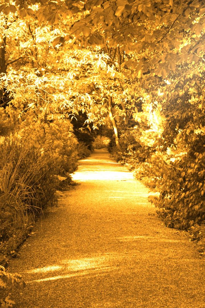 Goldener Herbst im Berggarten Herrenhausen / Hannover
