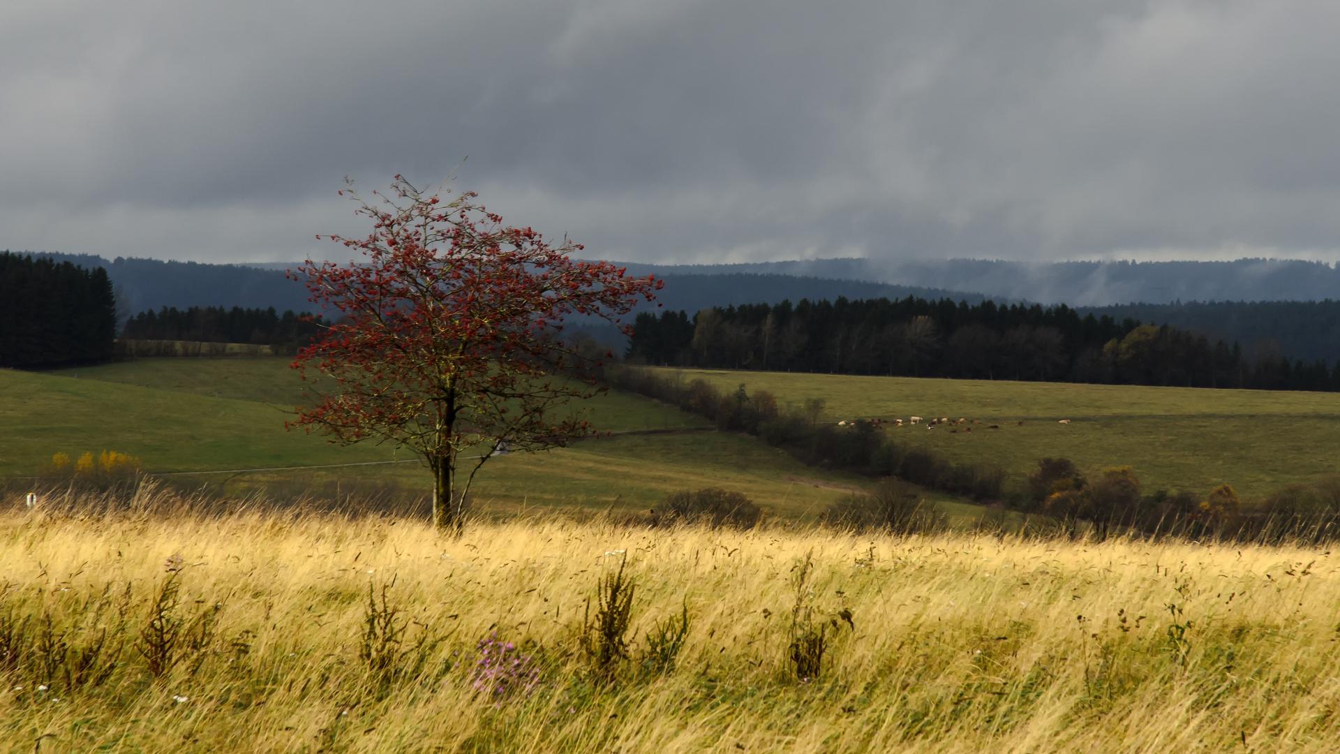 Goldener Herbst im Harz