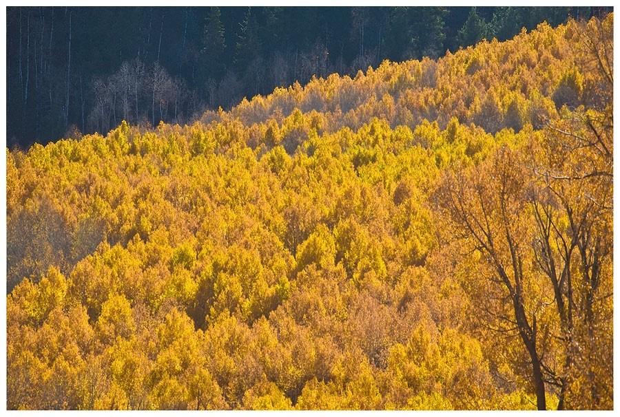 Goldener Herbst in Colorado