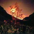 Goldener Herbst in den Alpen