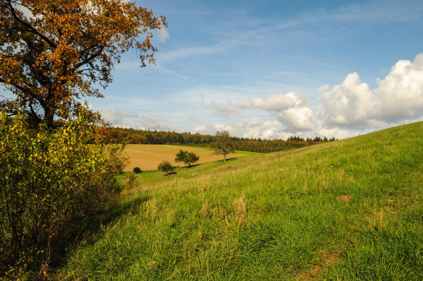 Goldener Herbst in Weiler 2