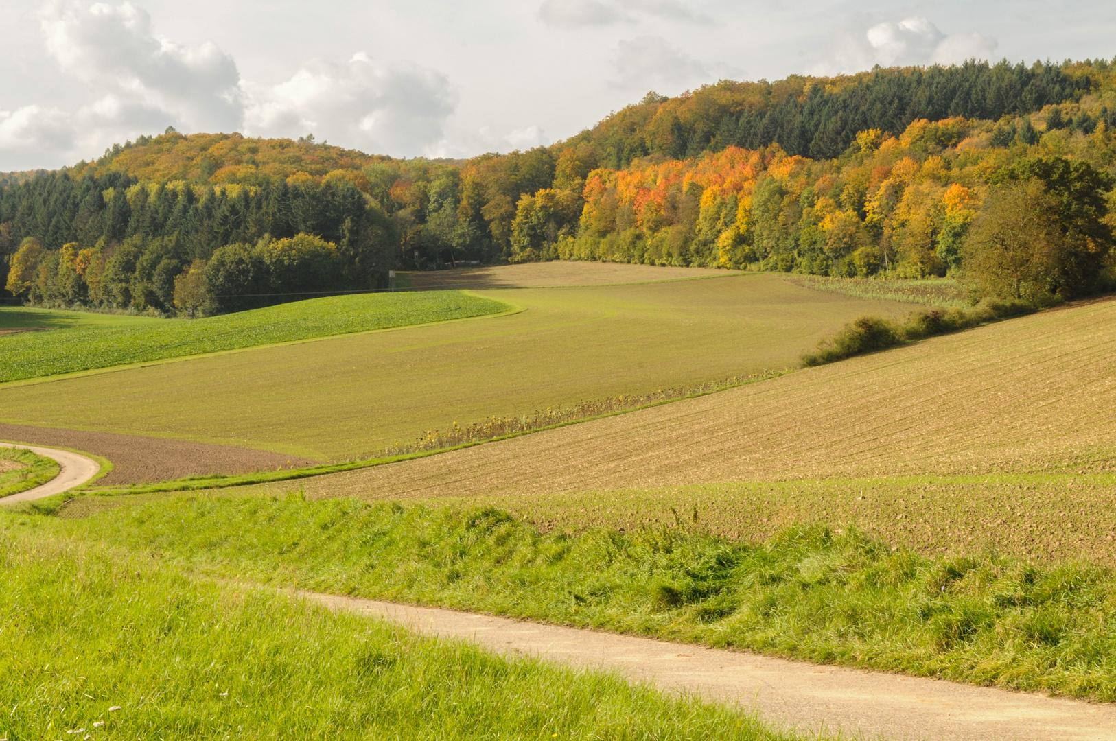 Goldener Herbst in Weiler 4