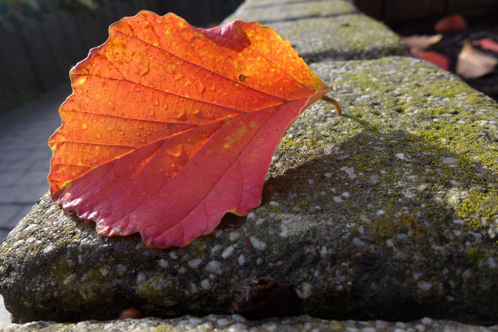 goldener Herbst2