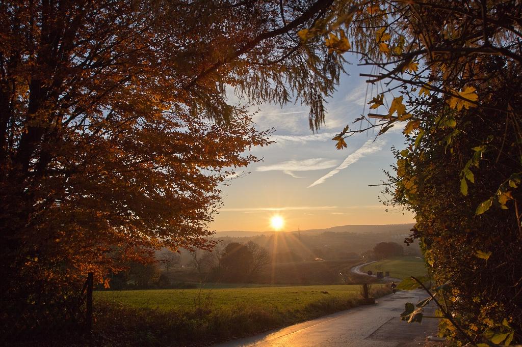 Goldener Herbstmorgen 1