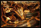 Goldener Knoten