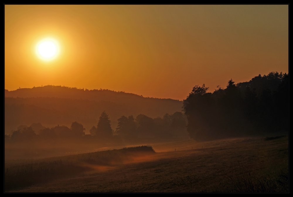 ....goldener morgen #2...