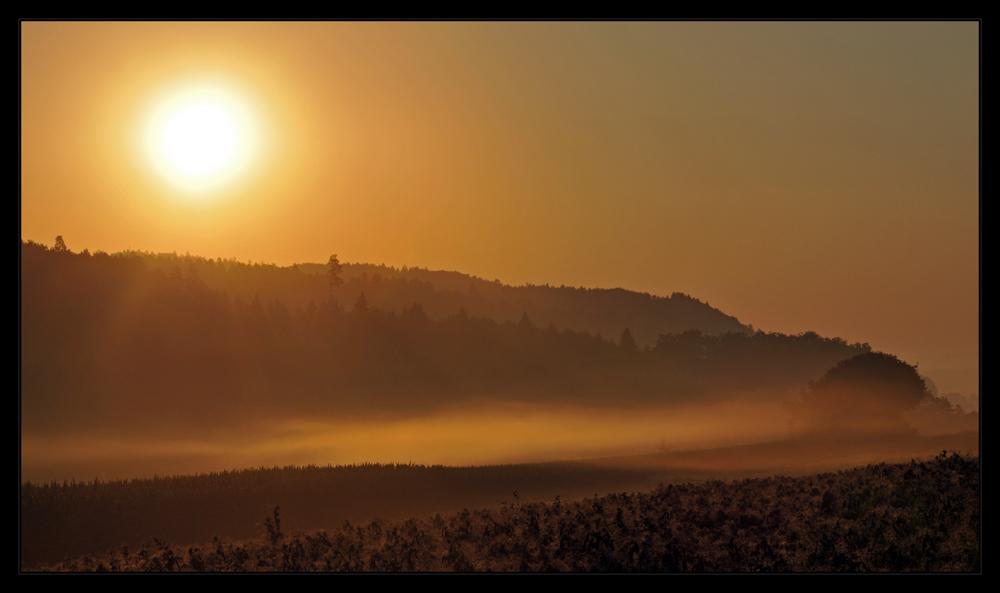 ...goldener morgen #4...
