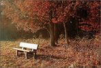 Goldener November ...