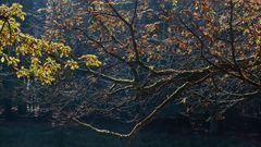 Goldener Oktober (2)