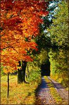 Goldener Oktober °3