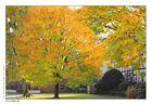 Goldener Oktober.....