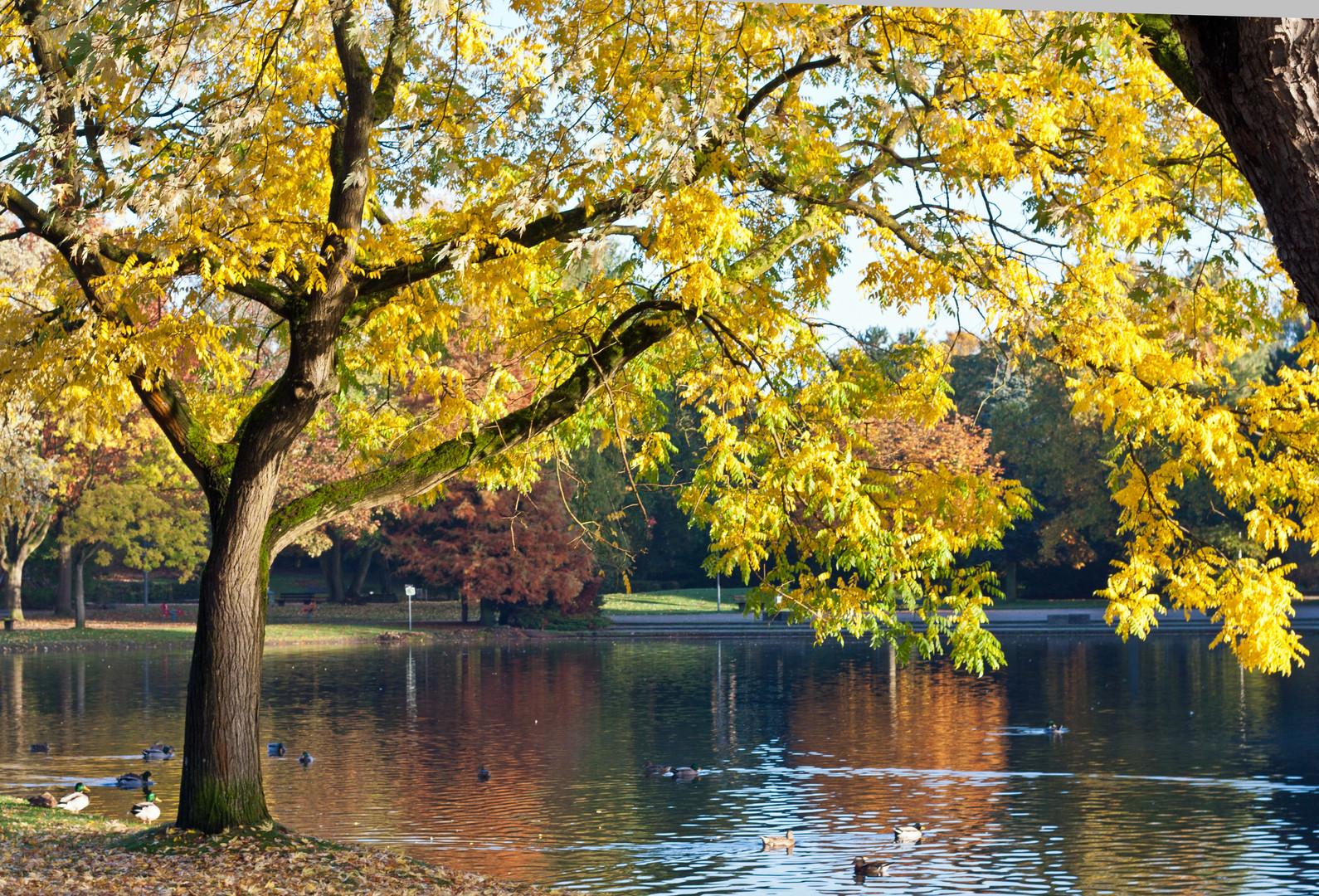 Goldener Oktober am Niederrhein -