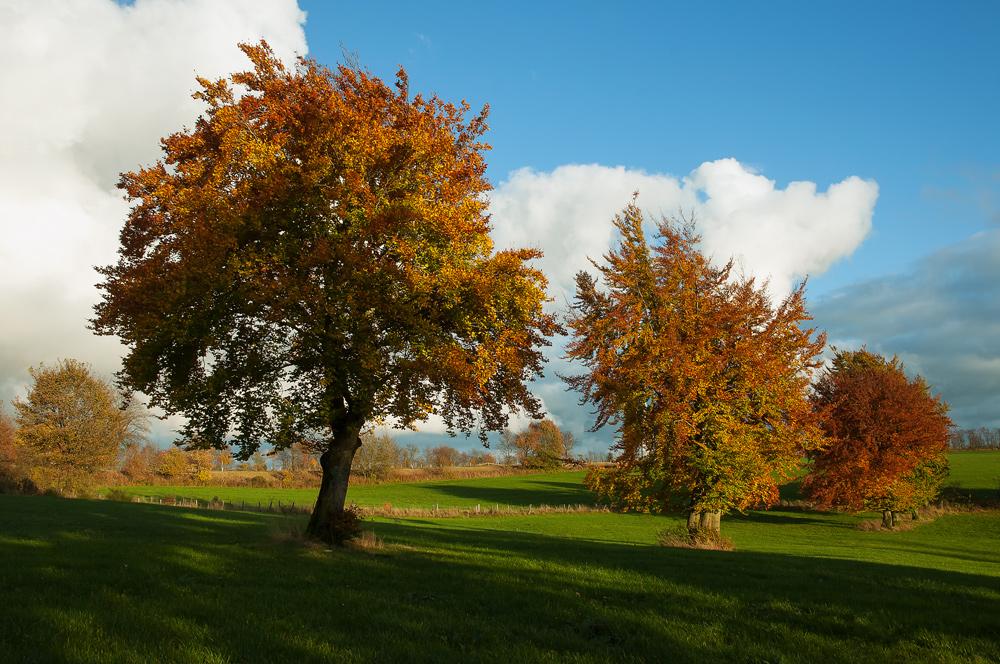 goldener Oktober...