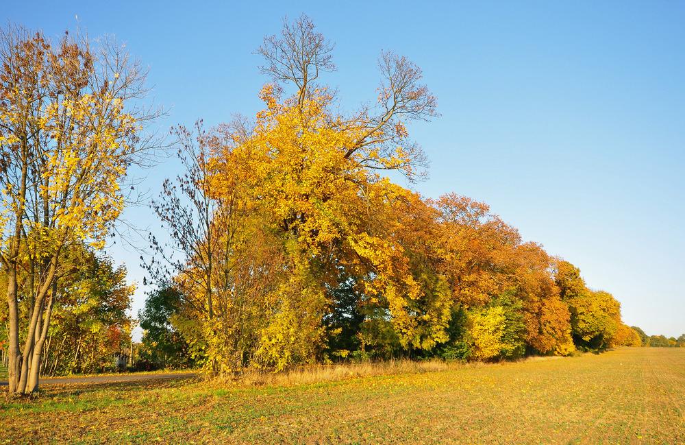 Goldener Oktober......